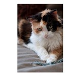 Calico Kitty Postcards (Package of 8)