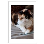 Calico Kitty Large Poster