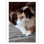 Calico Kitty Small Poster