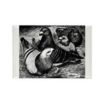 Giant Homer Pigeons Rectangle Magnet (10 pack)
