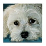 MALTESE DOG BOY Tile Coaster