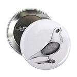 Turbiteen Pigeon 2.25