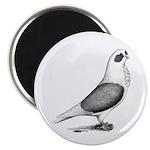 Turbiteen Pigeon Magnet