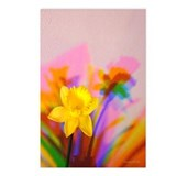 Chromatic Daffodil Shadows 180 Postcards (8)