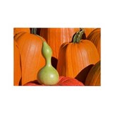 Pumpkins and Gourd Rectangle Magnet