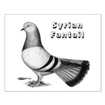 Syrian Fantail Pigeon Small Poster