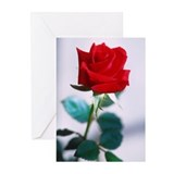 A single red rose Greeting Cards (Pk of 20)