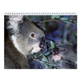 Koala Bear Wall Calendar (13 images)