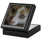 Gorgeous Calico Cat Keepsake Box