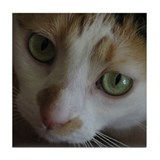 Gorgeous Calico Cat Tile Coaster