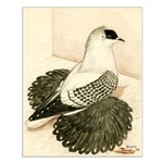 Swallow Pigeon Small Poster