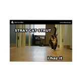 Alley Cat Allies LOLcats Magnet - Stray Cat Strut