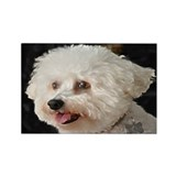 MARCO BICHON ART MAGNET