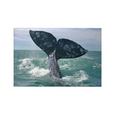 Rectangle Magnet-Whale (Gray)