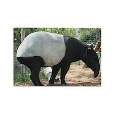 Rectangle Magnet-Tapir