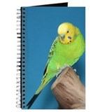 Journal-Bird