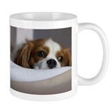 Cavalier King Charles Spaniel  Tasse