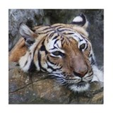 Tiger Portrait Tile Coaster