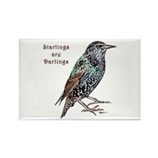 Starlings Are Darlings Rectangle Magnet