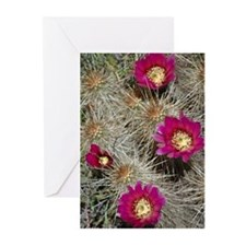 Cactus Flowers Greeting Cards (Pk of 10)