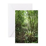 St. John Jungle Pathway Greeting Card