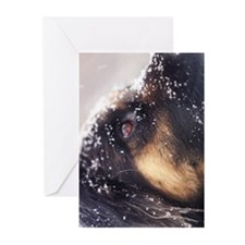 Cute Wistful Greeting Cards (Pk of 10)
