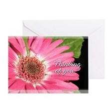Gerber / Gerbera Daisy Thinking of You Card 5x7