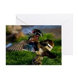 Wood Duck Wing Greeting Card