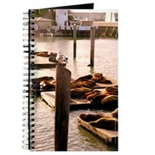 Pier 39 Sea Lions Journal