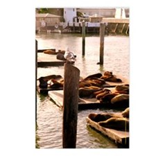 Pier 39 Sea Lions Postcards (Package of 8)