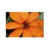 Orange Zinnia Rectangle Magnet