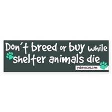 Shelter dogs Bumper Sticker