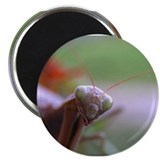 "Preying mantis 2.25"" Magnet (100 pack)"