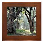 Trees of the Forest Framed Tile
