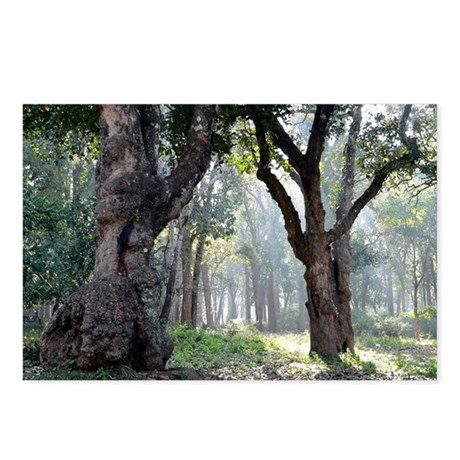 Trees of the Forest Postcards (Package of 8)
