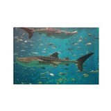 Rectangle Magnet-Whale Shark