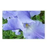 Blue-Violet Bearded Iris Postcards (Package of 8)