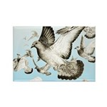 Flying Homer Pigeons Rectangle Magnet (10 pack)