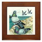 Rock Doves Framed Tile