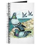Rock Doves Journal