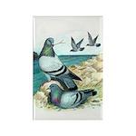 Rock Doves Rectangle Magnet (100 pack)