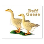 Buff Geese #5 Small Poster