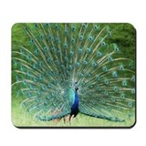 Mousepad-Peacock