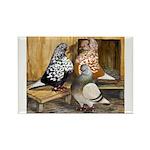 Domestic Flight Pigeons Rectangle Magnet (10 pack)