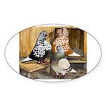 Domestic Flight Pigeons Oval Sticker