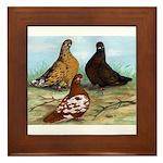 Shortfaced Tumbler Pigeons Framed Tile