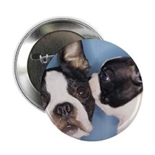 "French Bulldog Secret 2.25"" Button (100 pack)"
