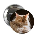 "Maine Coon 2.25"" Button"