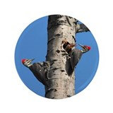 "Pileated Woodpecker Family 3.5"" Button"