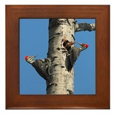 Pileated Woodpecker Family Framed Tile